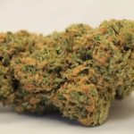 northern-lights-strain-review-information-2-300×300