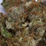 Buy White OG Flower Strain